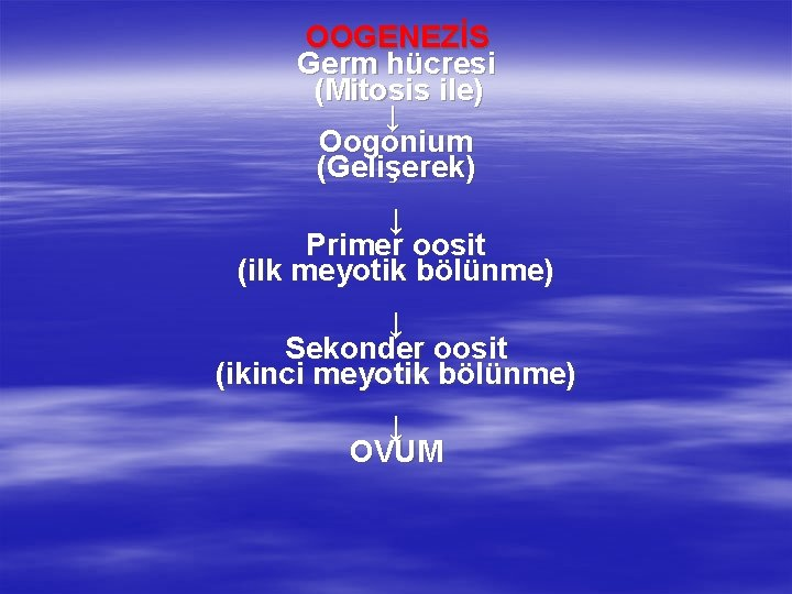 OOGENEZİS Germ hücresi (Mitosis ile) ↓ Oogonium (Gelişerek) ↓ Primer oosit (ilk meyotik bölünme)