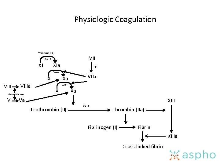Physiologic Coagulation Thrombin (IIa) VII Ca++ XI XIa TF Ca++ IX VIIIa Thrombin (IIa)