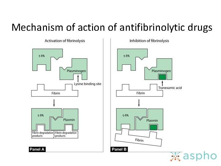 Mechanism of action of antifibrinolytic drugs