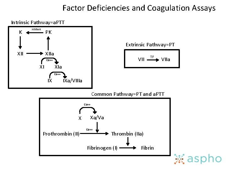 Factor Deficiencies and Coagulation Assays Intrinsic Pathway=a. PTT K HMWK PK Extrinsic Pathway=PT XIIa