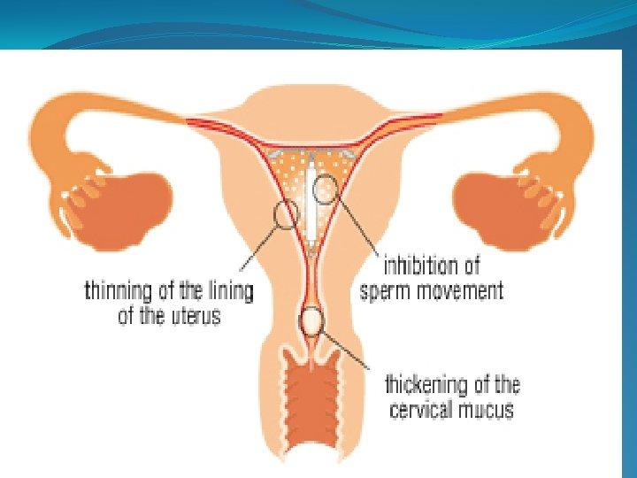 penis într  un fel de mucus