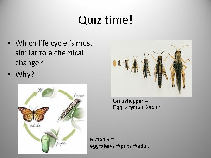 Quiz time! • Which life cycle is most similar to a chemical change? •
