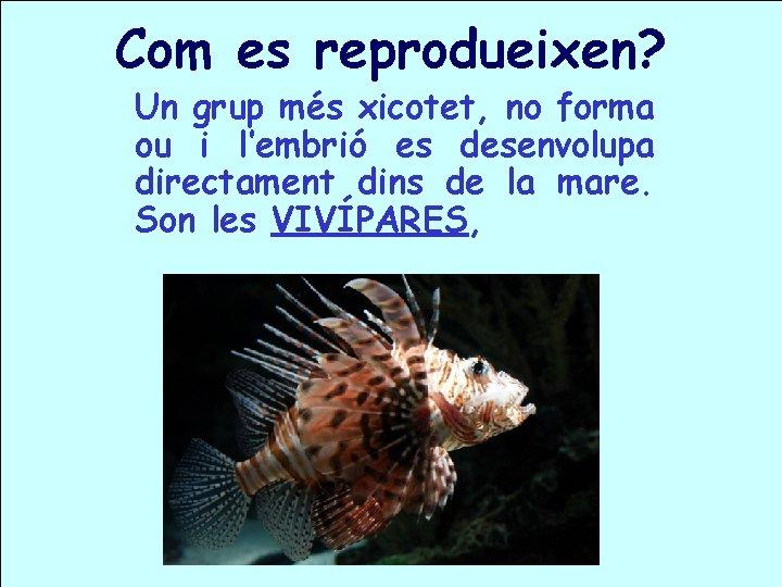 Com es reprodueixen? Un grup més xicotet, no forma ou i l'embrió es desenvolupa