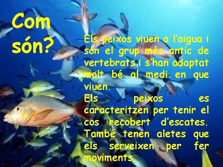 Com són? Els peixos viuen a l'aigua i són el grup més antic de