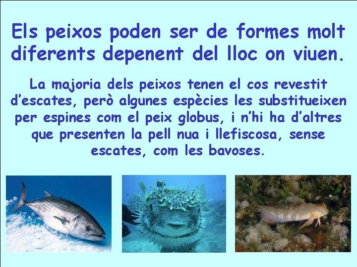 Els peixos poden ser de formes molt diferents depenent del lloc on viuen. La