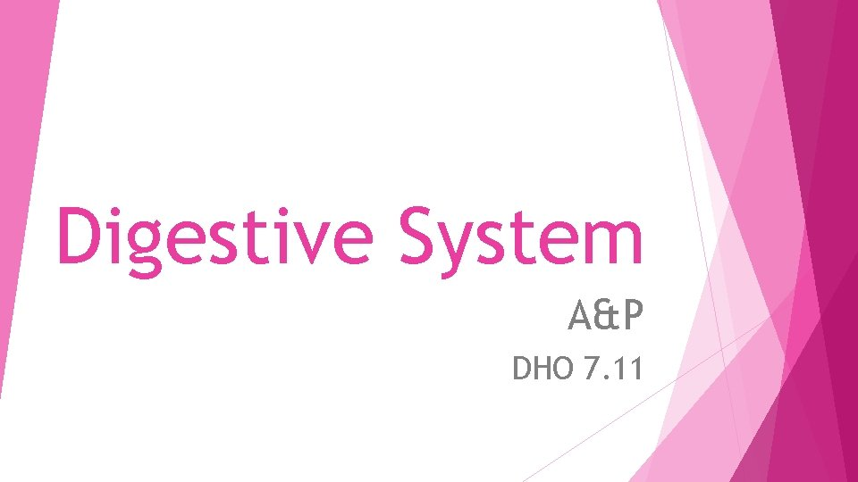 Digestive System A&P DHO 7. 11