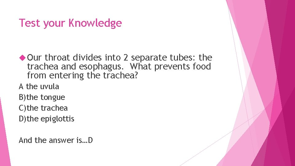Test your Knowledge Our throat divides into 2 separate tubes: the trachea and esophagus.