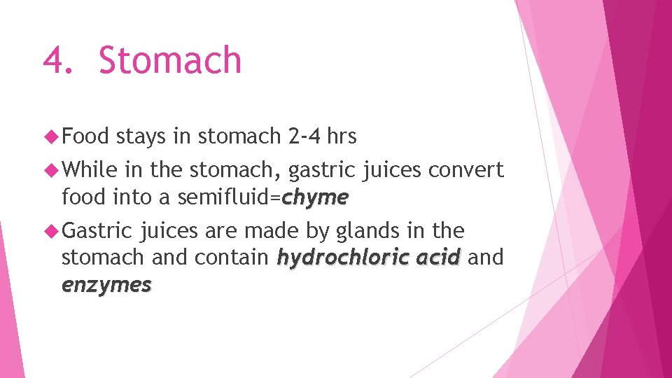4. Stomach Food stays in stomach 2 -4 hrs While in the stomach, gastric