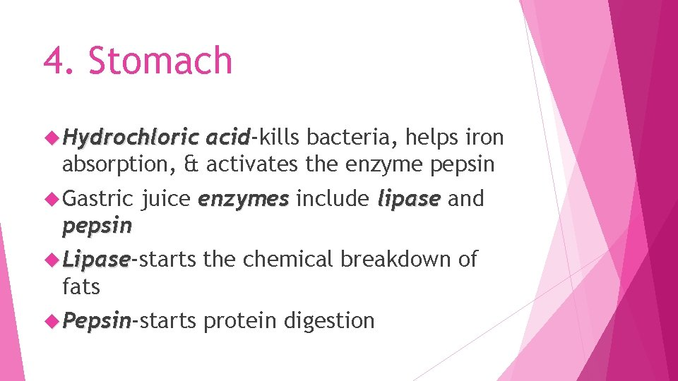 4. Stomach Hydrochloric acid-kills bacteria, helps iron acid absorption, & activates the enzyme pepsin