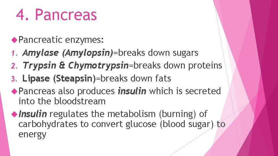 4. Pancreas Pancreatic enzymes: 1. Amylase (Amylopsin)=breaks down sugars Amylopsin) 2. Trypsin & Chymotrypsin=breaks