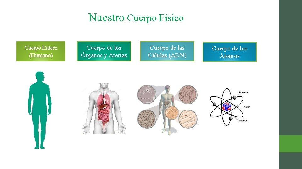 Nuestro Cuerpo Físico Cuerpo Entero (Humano) Cuerpo de los Órganos y Aterías Cuerpo de