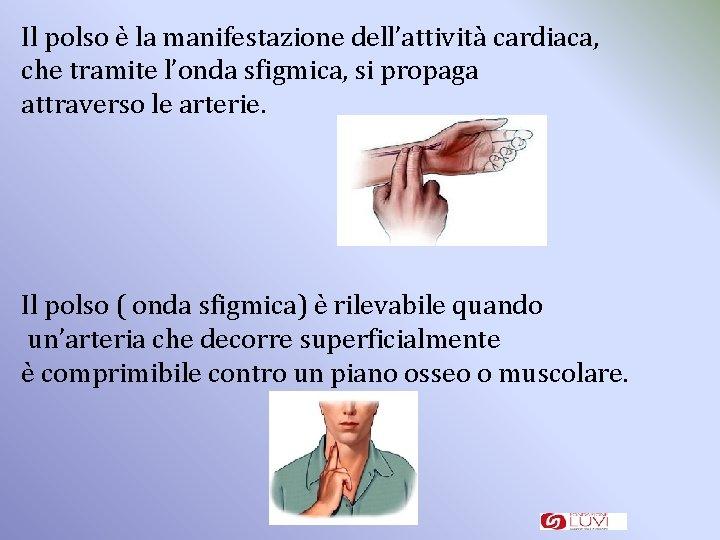 Il polso è la manifestazione dell'attività cardiaca, che tramite l'onda sfigmica, si propaga attraverso