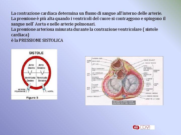 La contrazione cardiaca determina un flusso di sangue all'interno delle arterie. La pressione è