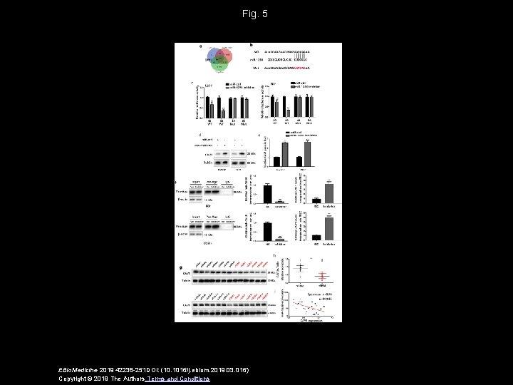 Fig. 5 EBio. Medicine 2019 42238 -251 DOI: (10. 1016/j. ebiom. 2019. 03. 016)