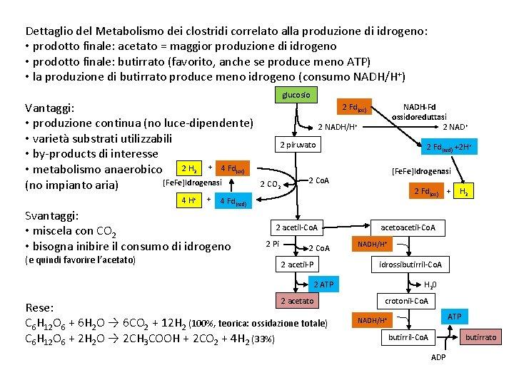 Dettaglio del Metabolismo dei clostridi correlato alla produzione di idrogeno: • prodotto finale: acetato