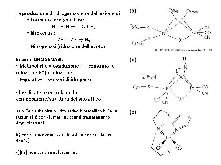 La produzione di idrogeno viene dall'azione di • Formiato-idrogeno liasi: HCOOH → CO 2
