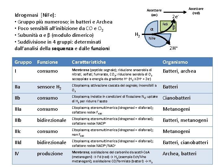 Idrogenasi [Ni. Fe]: • Gruppo più numeroso; in batteri e Archea • Poco sensibili