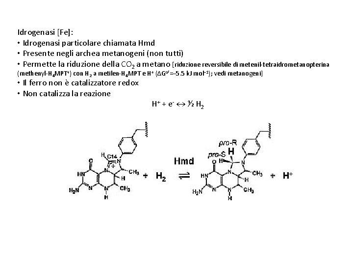 Idrogenasi [Fe]: • Idrogenasi particolare chiamata Hmd • Presente negli archea metanogeni (non tutti)