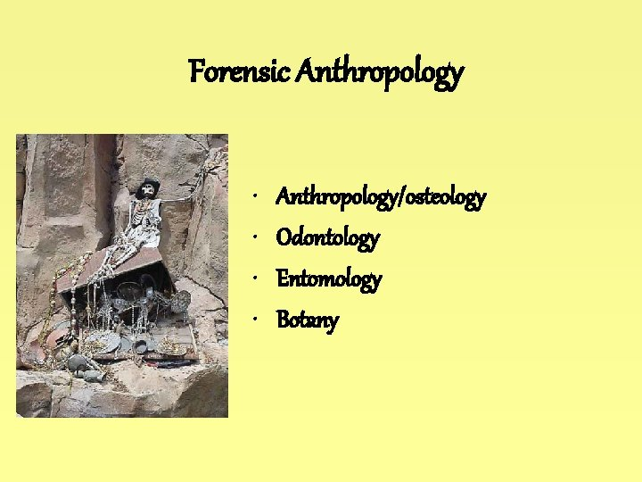 Forensic Anthropology • • Anthropology/osteology Odontology Entomology Botany