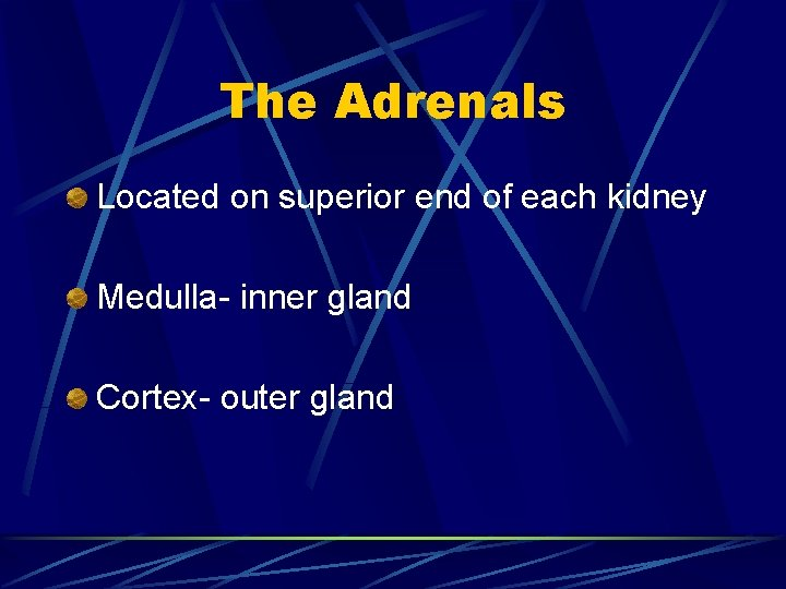 The Adrenals Located on superior end of each kidney Medulla- inner gland Cortex- outer