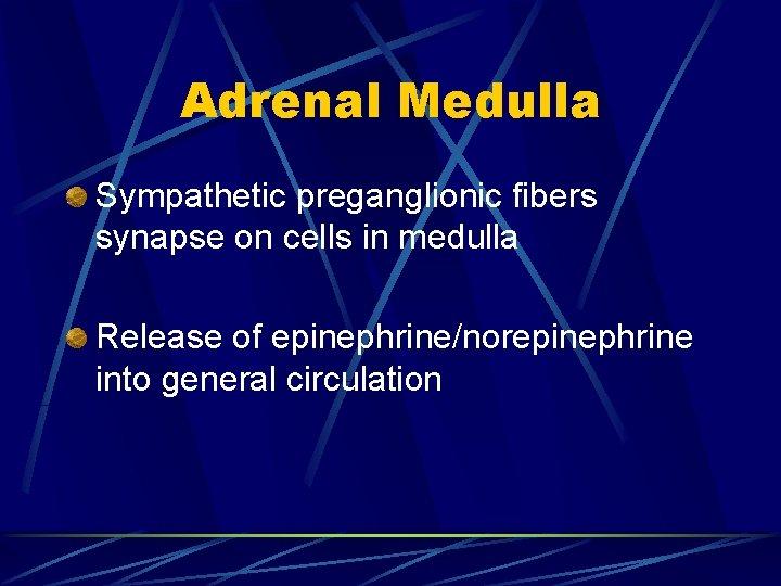 Adrenal Medulla Sympathetic preganglionic fibers synapse on cells in medulla Release of epinephrine/norepinephrine into