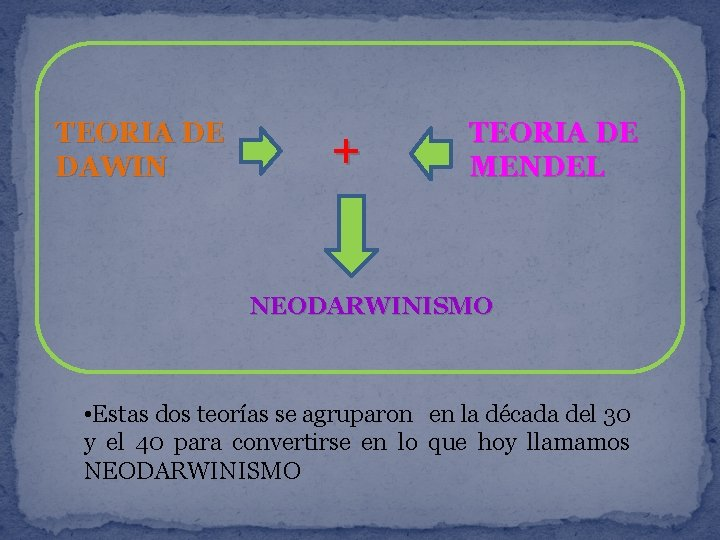 TEORIA DE DAWIN + TEORIA DE MENDEL NEODARWINISMO • Estas dos teorías se agruparon