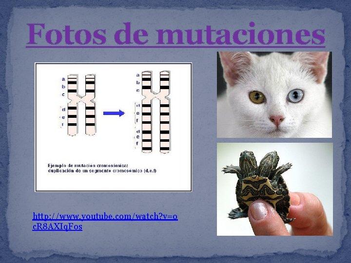Fotos de mutaciones http: //www. youtube. com/watch? v=o c. R 8 AXIq. Fos