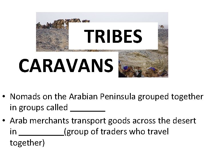TRIBES CARAVANS • Nomads on the Arabian Peninsula grouped together in groups called •