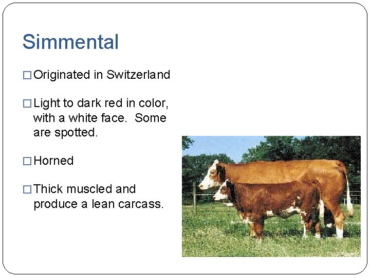 Simmental � Originated in Switzerland � Light to dark red in color, with a