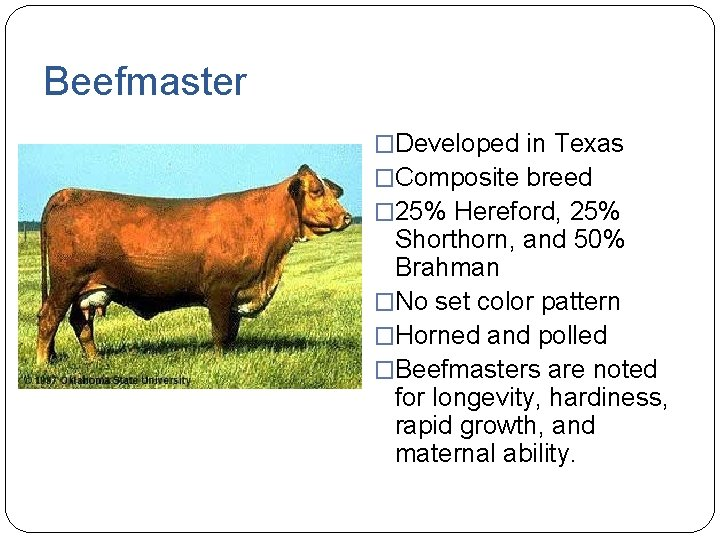 Beefmaster �Developed in Texas �Composite breed � 25% Hereford, 25% Shorthorn, and 50% Brahman