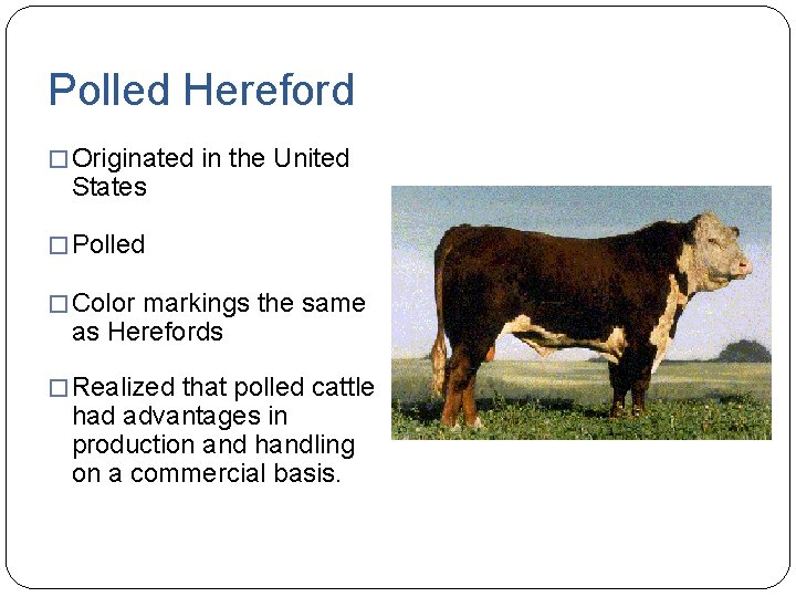 Polled Hereford � Originated in the United States � Polled � Color markings the