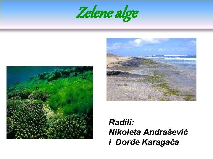 Zelene alge Radili: Nikoleta Andrašević i Đorđe Karagača