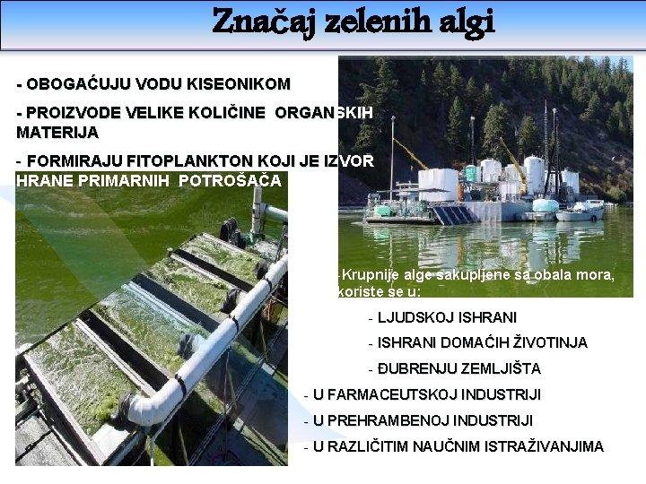 Značaj zelenih algi - OBOGAĆUJU VODU KISEONIKOM - PROIZVODE VELIKE KOLIČINE ORGANSKIH MATERIJA -