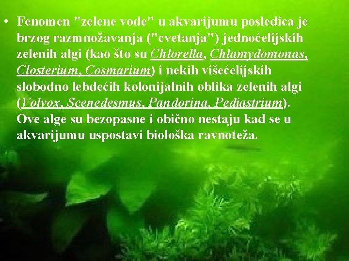 """• Fenomen """"zelene vode"""" u akvarijumu posledica je brzog razmnožavanja (""""cvetanja"""") jednoćelijskih zelenih"""