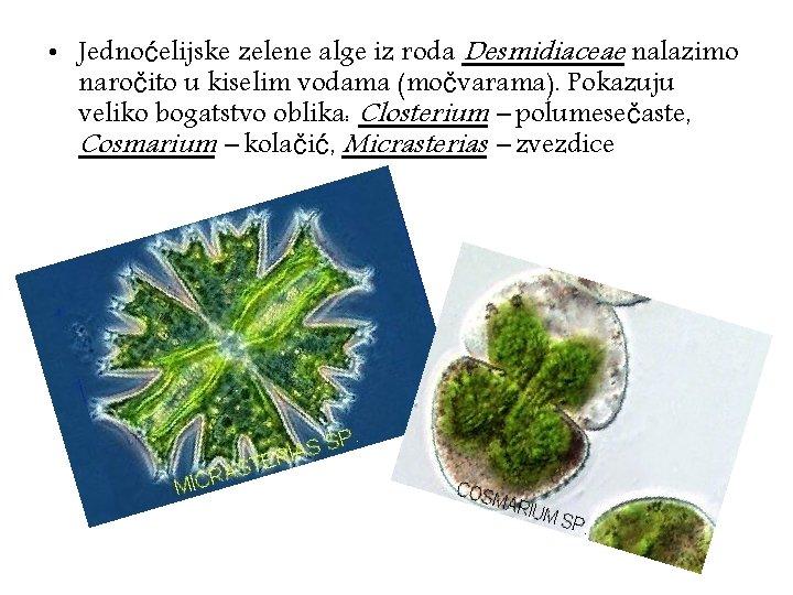 • Jednoćelijske zelene alge iz roda Desmidiaceae nalazimo naročito u kiselim vodama (močvarama).