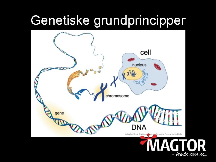 Genetiske grundprincipper