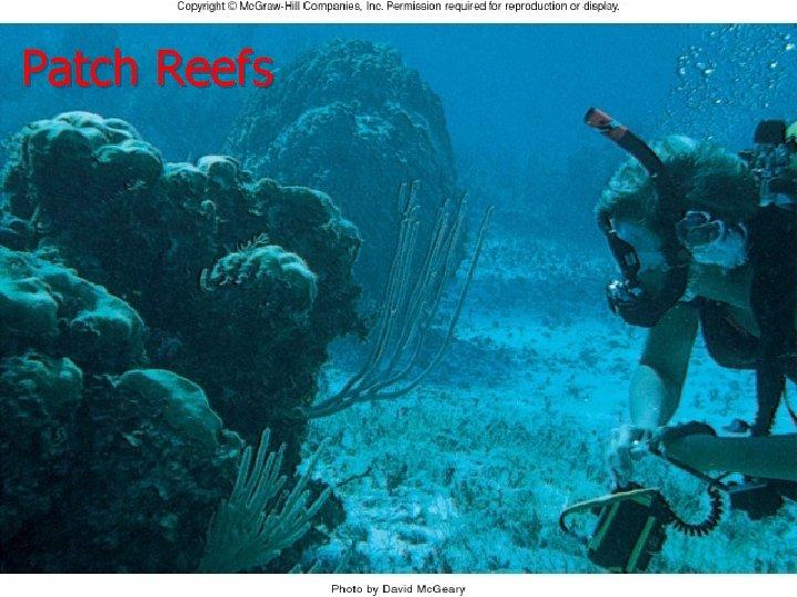 Patch Reefs