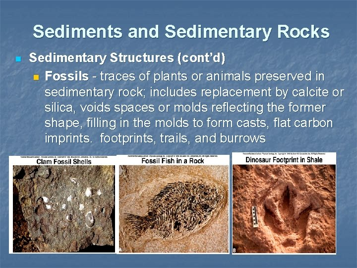 Sediments and Sedimentary Rocks n Sedimentary Structures (cont'd) n Fossils - traces of plants