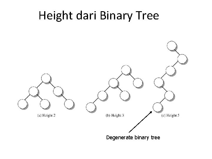 Height dari Binary Tree Degenerate binary tree