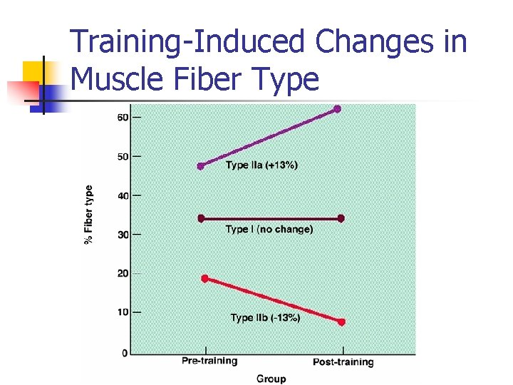 Training-Induced Changes in Muscle Fiber Type