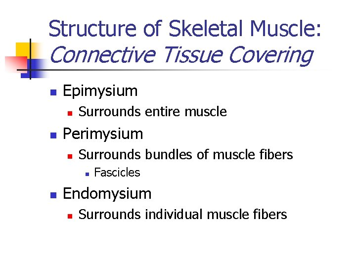 Structure of Skeletal Muscle: Connective Tissue Covering n Epimysium n n Surrounds entire muscle