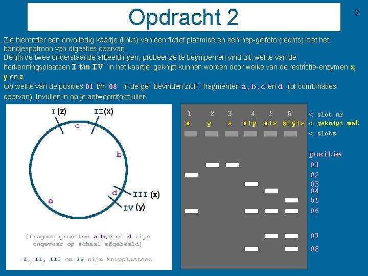 Opdracht 2 3 Zie hieronder een onvolledig kaartje (links) van een fictief plasmide en