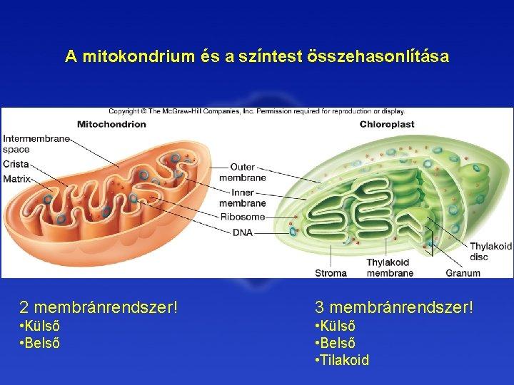 mitokondrium parazita