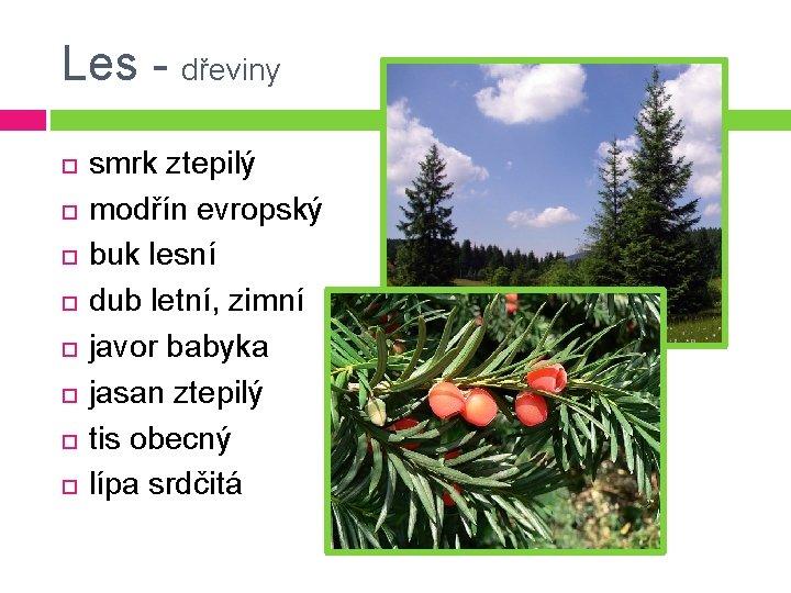 Les - dřeviny smrk ztepilý modřín evropský buk lesní dub letní, zimní javor babyka