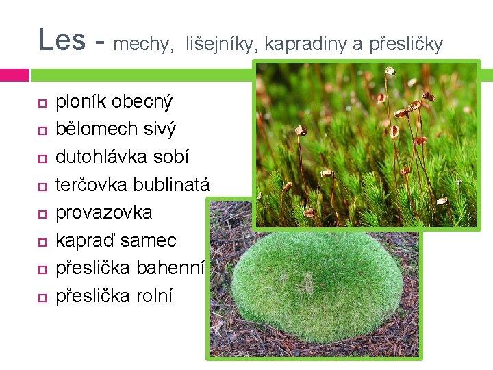 Les - mechy, lišejníky, kapradiny a přesličky ploník obecný bělomech sivý dutohlávka sobí terčovka