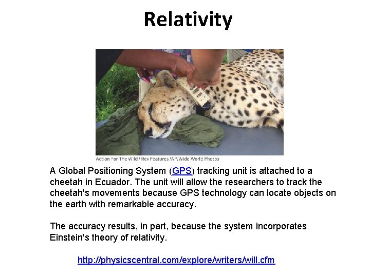 Relativity A Global Positioning System (GPS) tracking unit is attached to a cheetah in