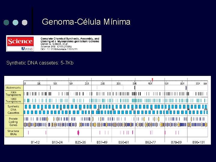 Genoma-Célula Mínima Synthetic DNA cassetes: 5 -7 Kb