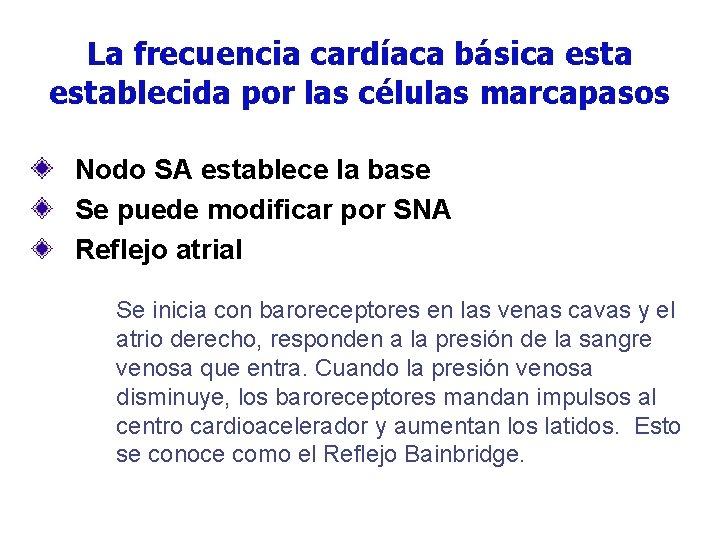 La frecuencia cardíaca básica establecida por las células marcapasos Nodo SA establece la base