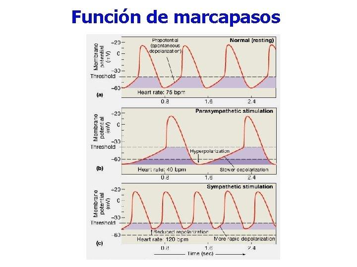 Función de marcapasos