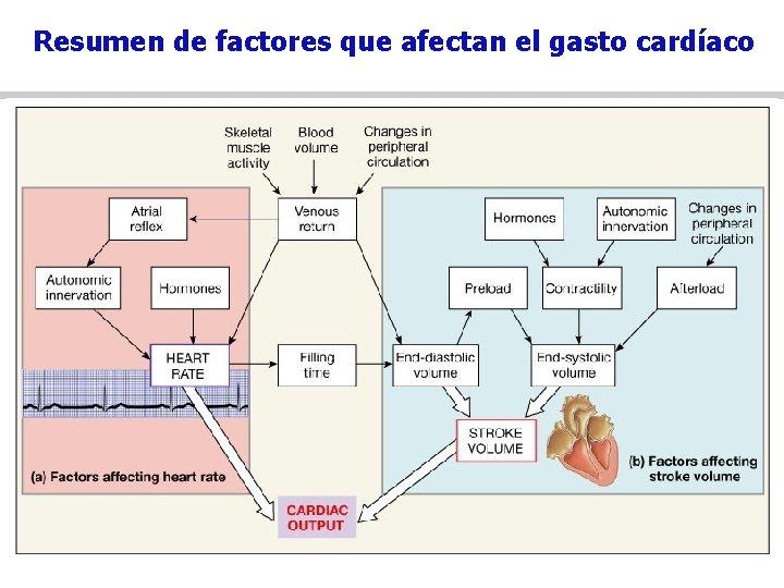 Resumen de factores que afectan el gasto cardíaco